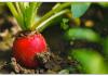 Start an Organic Farm in Uttarakhand