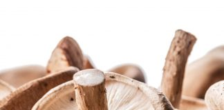 Medicinal Mushrooms, Good Source of Dietary Supplements