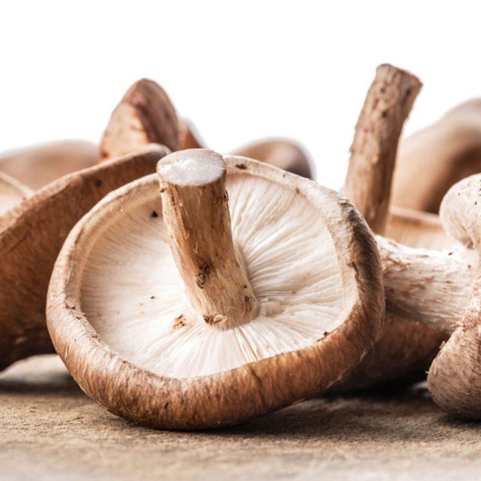 Medicinal Mushrooms, Good Source of Dietary Supplements